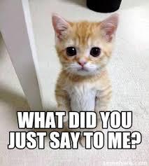 Unhappy Cat Meme - meme creator cute sad cat meme meme generator at memecreator org