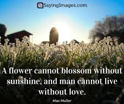 Quotes About Landscape by Best Famous Quotes About Life Love Happiness U0026 Friendship
