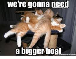 Cat Buy A Boat Meme - were gonna need a bigger boat cat addicts meme on me me