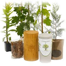 the living urn america s leading bio urn planting system