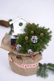65 best christmas pots conifers plants decorations images on