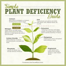 australian native plant identification identifying plant nutrient deficiencies permablitz melbourne