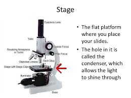 why is a light microscope called a compound microscope parts of a microscope