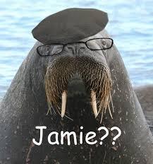 Walrus Meme - jamie walrus jamie from mythbusters walrus science muhahahahaha