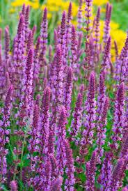 native shade plants garden flowering perennials for shade sound native plants