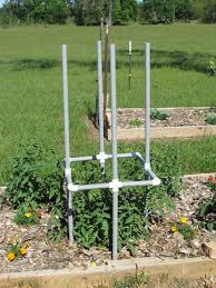 the big heat in pursuit of the perfect tomato pvc tomato cages
