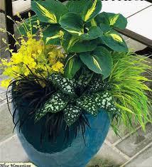 Plant Combination Ideas For Container Gardens - best 25 hakone grass ideas on pinterest hydrangea macrophylla