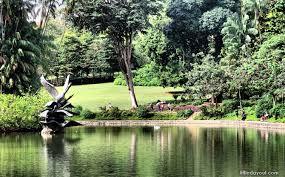Singapore Botanic Gardens Location Swan Lake At Singapore Botanic Gardens 5 Interesting Things You