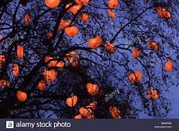 shaped lights hang in the trees surrounding the