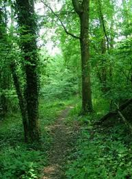 lade wood 11 wondrous woods to explore in somerset and dorset somerset live