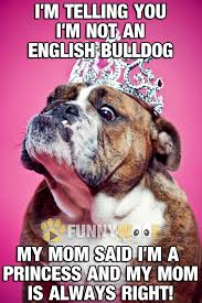 Funny Memes In English - funny dog memes