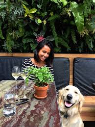 The Patio San Diego Dog Friendly Dining At The Patio On Goldfinch My Socal U0027d Life