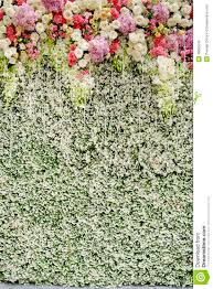 wedding backdrop flowers colorful flowers with green wall for wedding backdrop stock photo