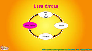what is life cycle video for kids youtube