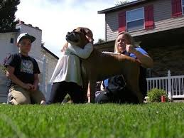 boxer dog utah utah family discovers dog euthanized by vet alive and up for ad