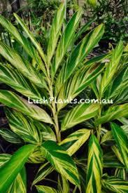 ornamental trees and shrubs