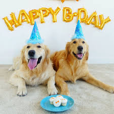 dog birthday party 10 ways to the best birthday party for your dog
