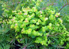 Lime Green Flowers - 28 best gorgeous greens green plants images on pinterest green