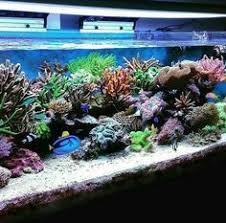 Floating Aquascape Reef2reef Saltwater And Reef Aquarium Forum - 3 foot office nano reef2reef saltwater and reef aquarium forum