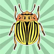 anatomy coloring book download insect anatomy sticker colorado potato beetle leptinotarsa