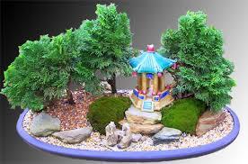 batemans bay bonsai welcome to batemans bay bonsai
