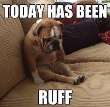 Dog Funny Meme - 25 funny dog memes dogtime