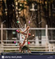 a bare branch decorated as a sad meagre pathetic u0027christmas tree