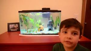 beginner fish tank with betta fish and marble molly plus live
