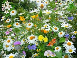 wild flowers spring free stock photo public domain pictures