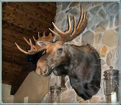 Moose Head Decor Best 25 Moose Head Ideas On Pinterest Diy Resin Antlers Animal
