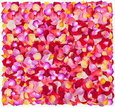 fresh petals fresh colorful flower petals stock image image of particolored