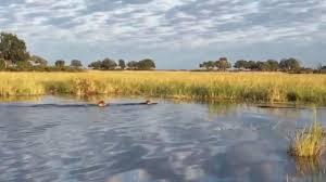 pastor attempting to walk on water like jesus is eaten by