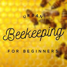 urban beekeeping for beginners home facebook