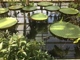 Different Types Of Japanese Gardens - lovely japanese garden pond full of fish look out for the