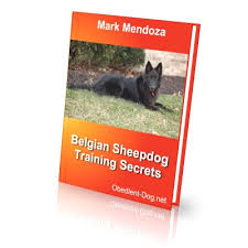 belgian sheepdog oregon belgian sheepdog training secrets how to train a belgian sheepdog