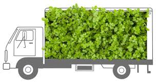 plant delivery general information gulley greenhouse garden center