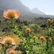 Kirstenbosch National Botanical Gardens by Best 25 National Botanical Gardens Ideas Only On Pinterest Old