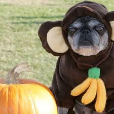 dog halloween costumes for 2017 every dog can have fun
