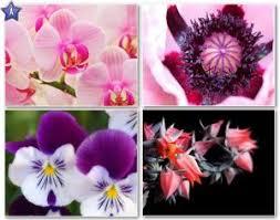 வால்பேப்பர்கள் ( flowers wallpapers ) - Page 19 Images?q=tbn:ANd9GcTecGjnoxvBkZeZxbuEMXLCPM8GRf2Bf6K3UHWpxuMFT64X1ijkWQ