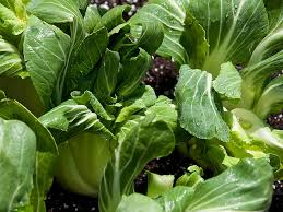 best vegetables for a fall garden