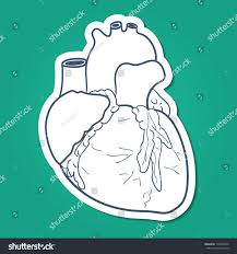 anatomical heart sketch sticker vector element stock vector