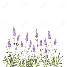 wreath of lavender flowers in watercolor paint style the lavender