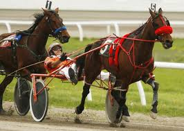 Are Horses Color Blind Scarborough Downs Harnessracinghistory
