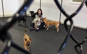 Comfortable Dog Dog Boarding Services In Goldsboro Nc Eli U0027s Friends
