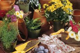 How To Arrange Indoor Plants by How To Change Soil In Indoor Plants Home Guides Sf Gate