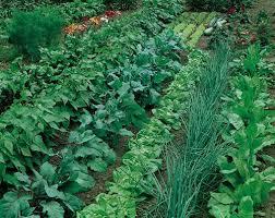 robert parkin craftsman gardener and plantsman