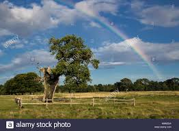 rainbow oak tree in stock photos rainbow oak tree in