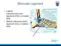 Foot Ligament Anatomy Anatomy Of Feet