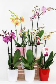 orchid plants flowers by and flower shop in muskegon
