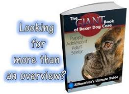 boxer dog noises boxer dog barking training a boxer puppy or dog for barking problems